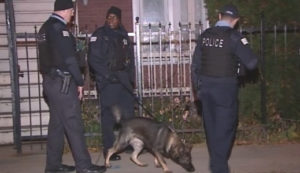 A police dog helps investigate a shooting at a South Chicago party early Saturday. | Network Video Productions